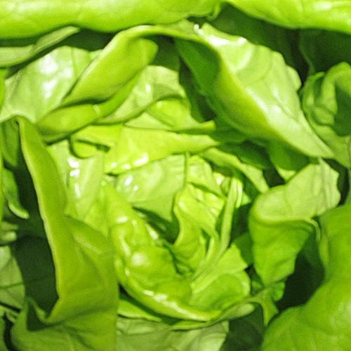 bacons-lettuce-butter-02-2013