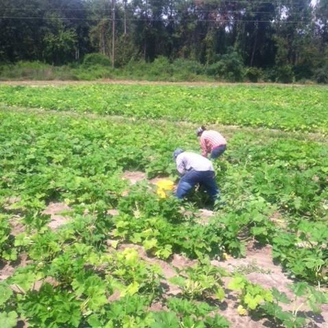 4-boatrights-farm-crop