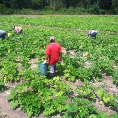 4-boatrights-farm2-crop