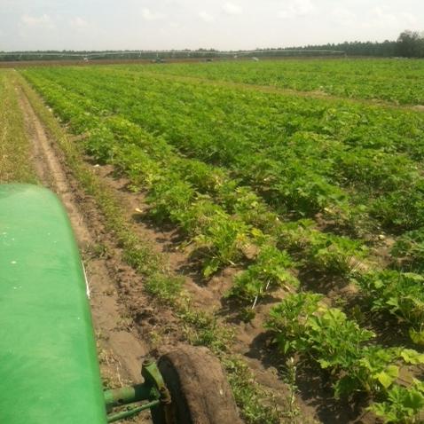 4-boatrights-farm3-crop