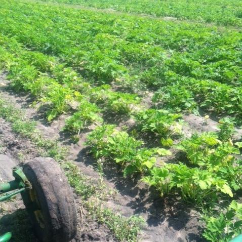 4-boatrights-farm4-crop