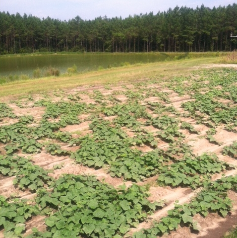 4-boatrights-farm6-crop