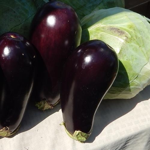 eggplant-cabbage6-2016