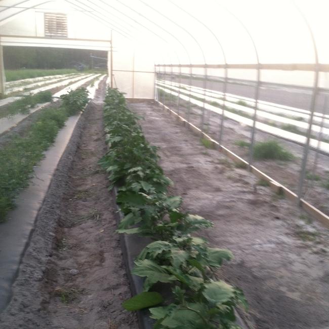 rows-veiw2-crop