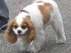 oct-29-2012furry-dog