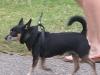 oct-29-2012little-dog