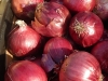 big-red-onions