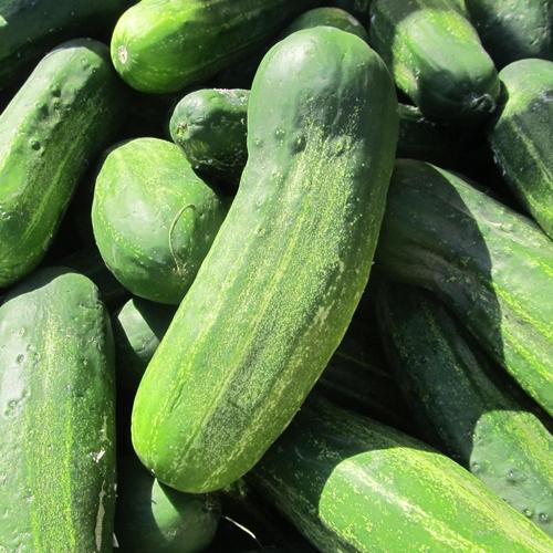 cucumbers-fernandina-farmers-market-02-2013