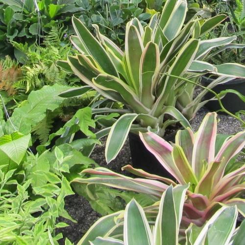 05009-22-plants-web
