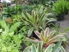 09-22-plants