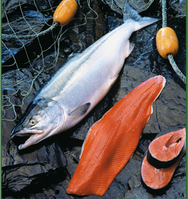 Seasonal Salmon is Food for Thought