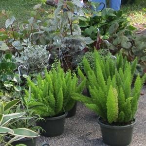 Cactus nursery jacksonville fl