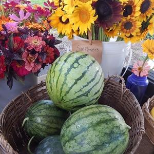 Seasonal Produce has Many Advantages