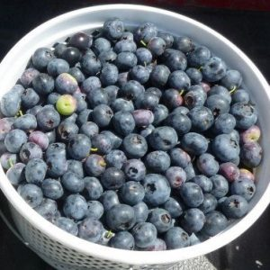 blueberries-2014-crop