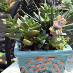 succulents fernandina