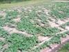 4-boatrights-farm5-crop