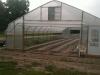 greenhouse-crop