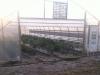greenhouse2-crop