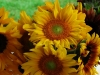 sunflowers713-jpg