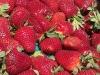 kings-strawberries-4-14