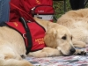 autism-service-dogs2