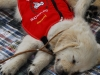 july-autism-service-dog