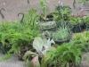 050010-06-12-plants-web